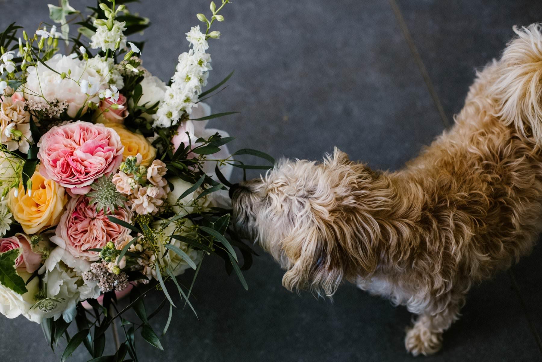 dog smelling a wedding bouquet