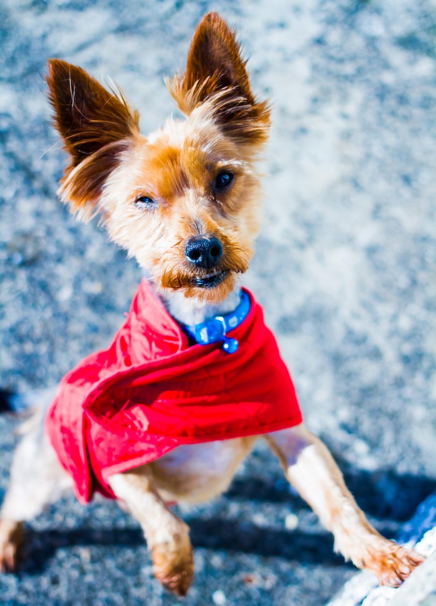Dog Rescue Photographer Northern Ireland