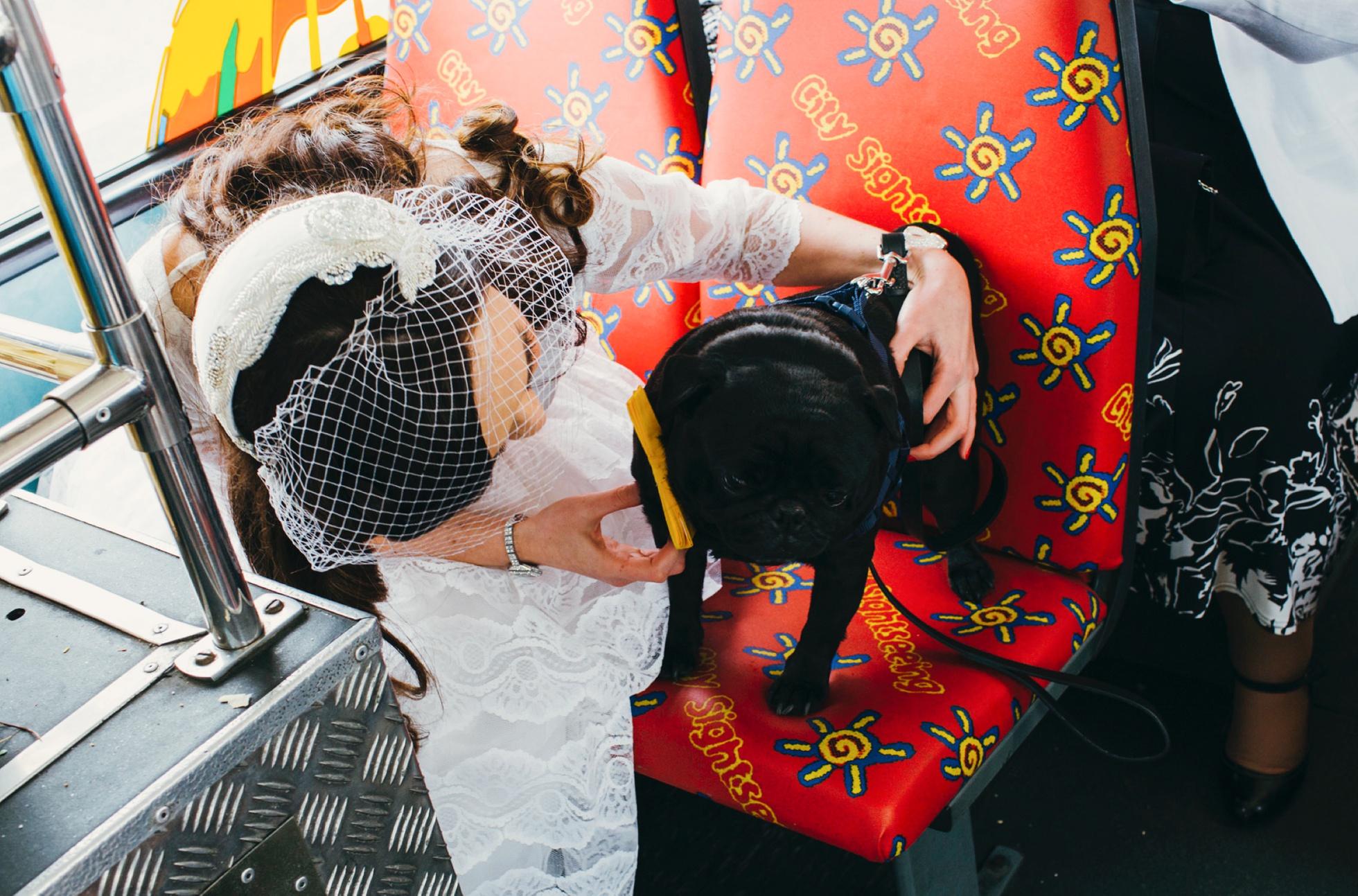 Pug on a bus, wedding photographer northern ireland
