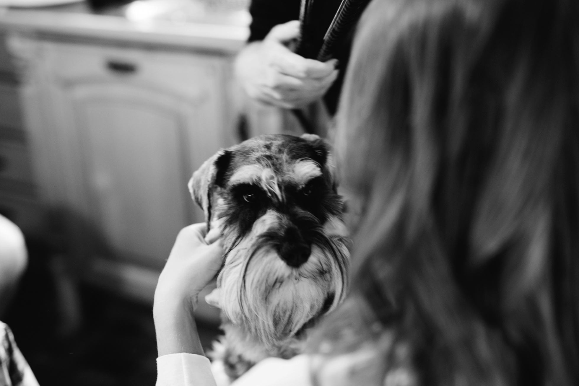 mini schnauzer wedding photography northern ireland
