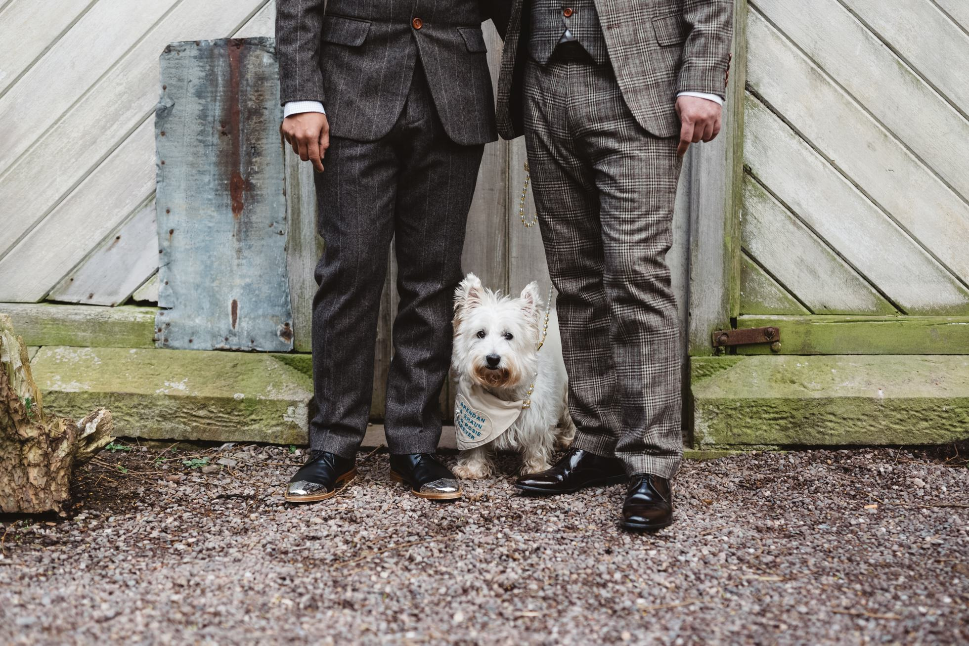destination same sex wedding photography ireland, west highland terrier