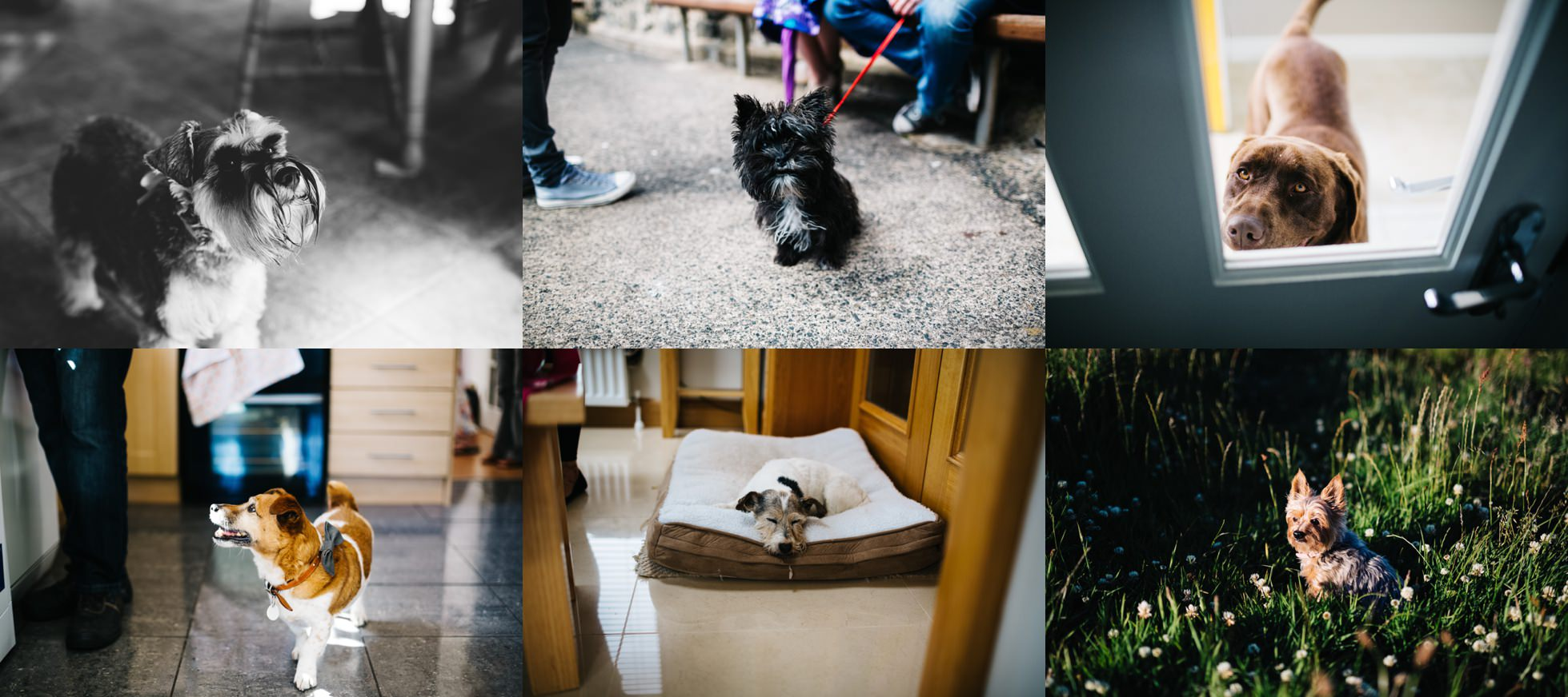 wedding photographer northern ireland, pets at weddings