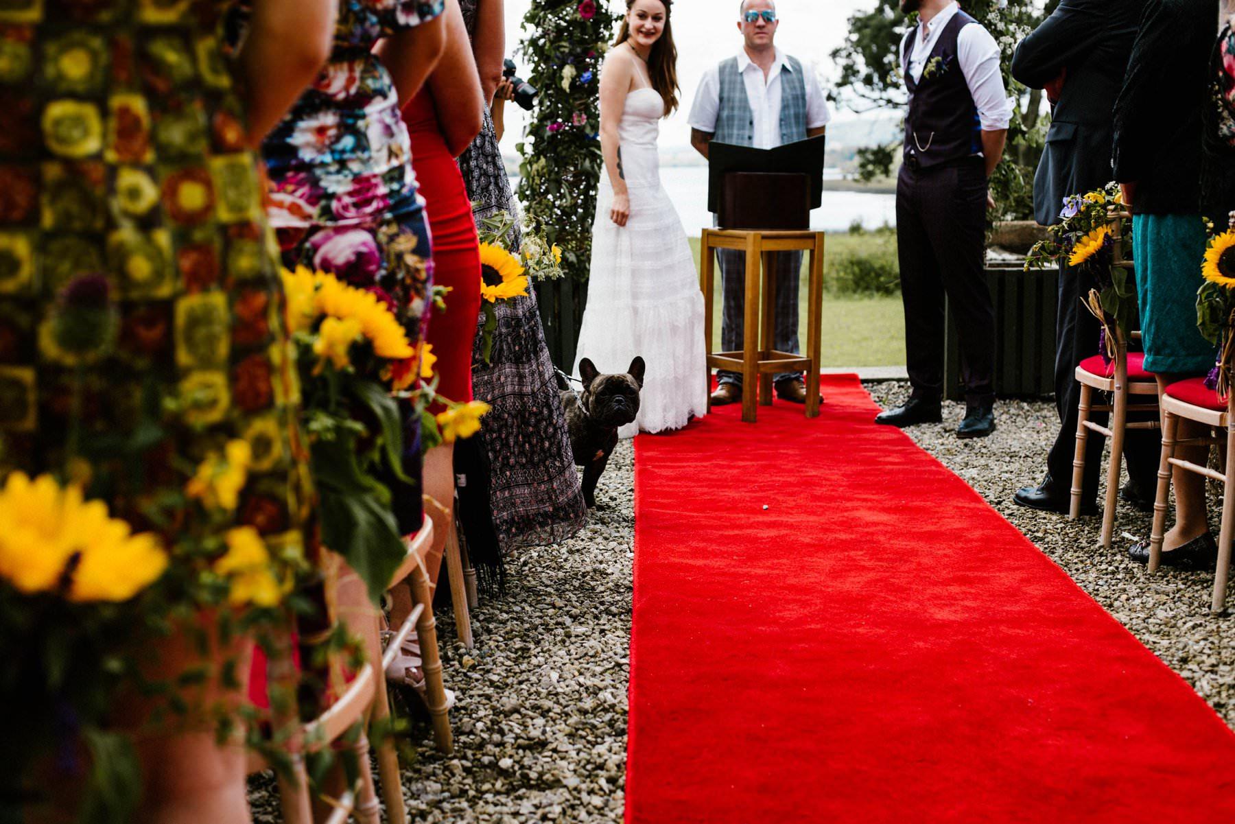 french bull dog at wedding photography ireland
