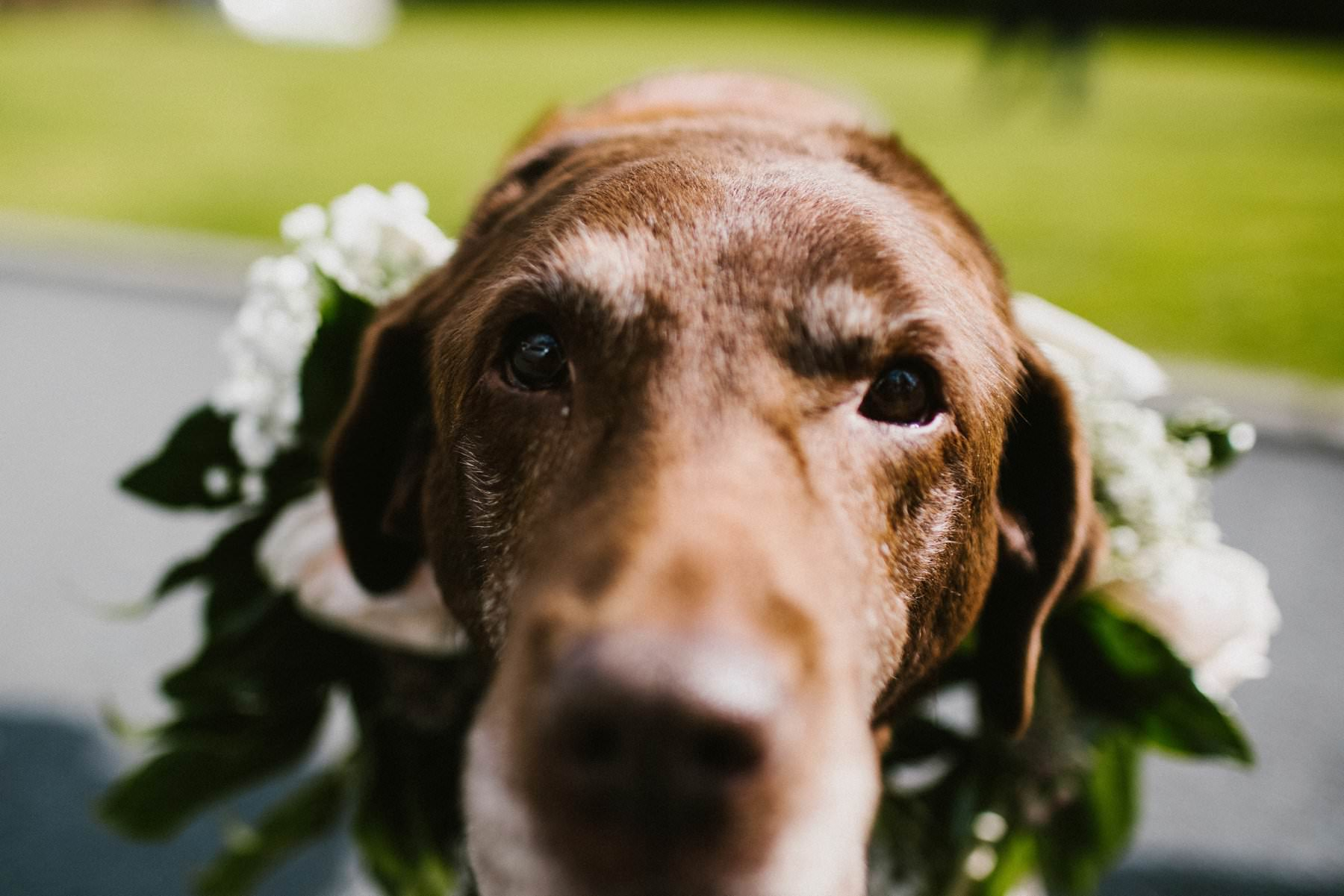 dogs at weddings in northern ireland