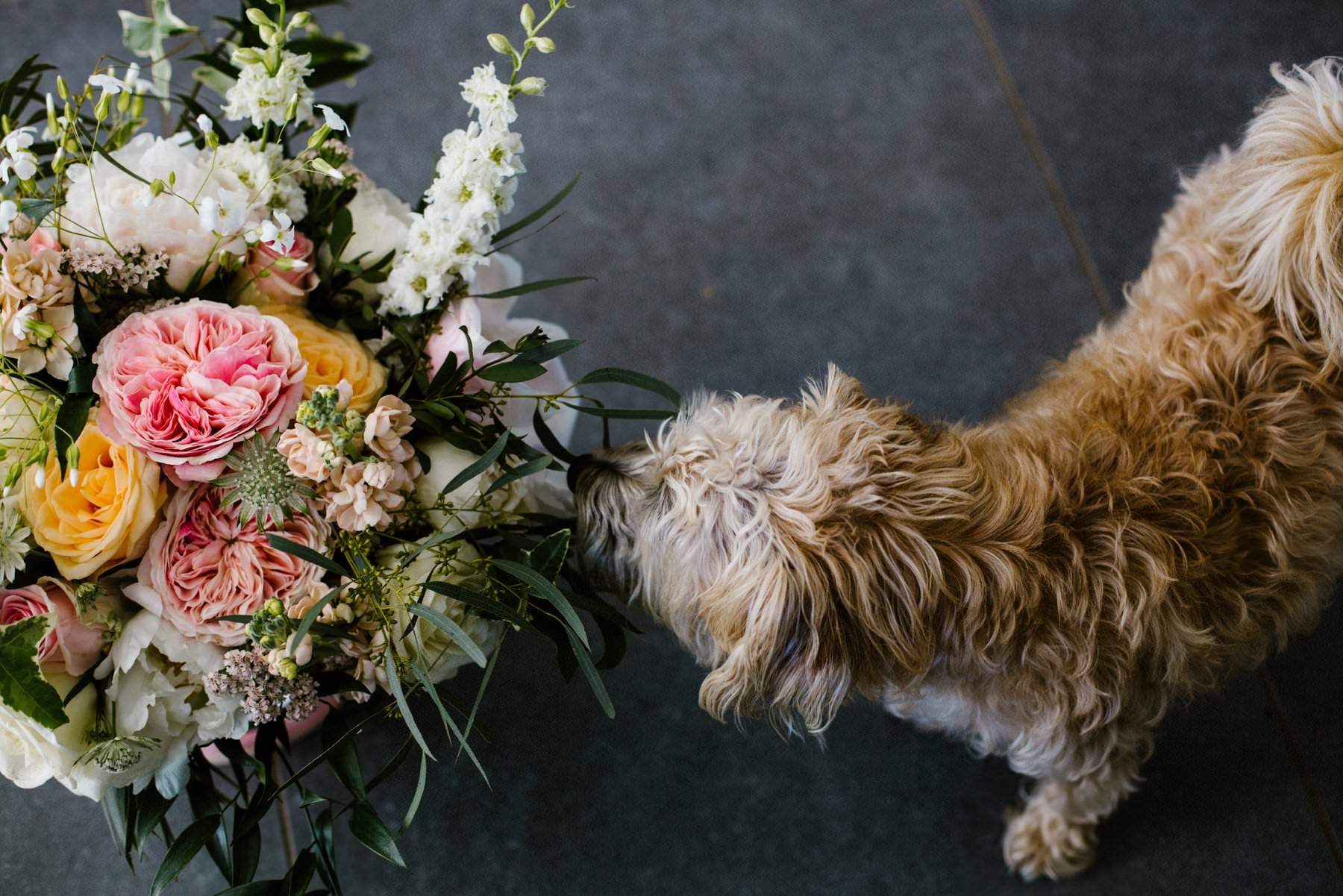 dog smelling bride's bouquet, wedding photographer northern ireland